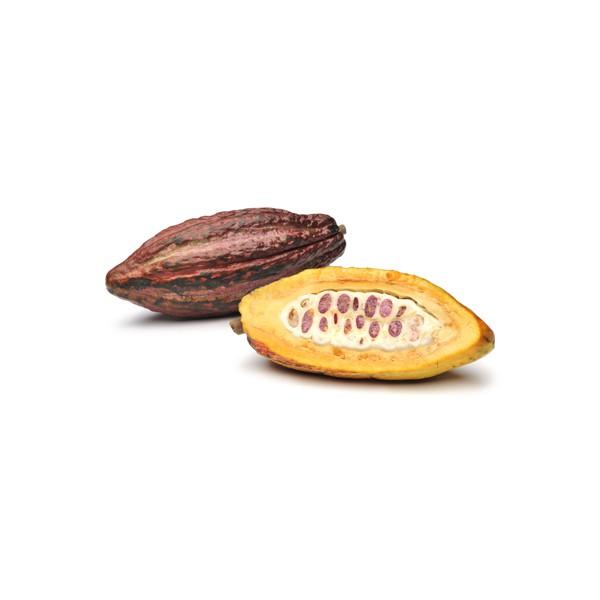 ekologisk kakao